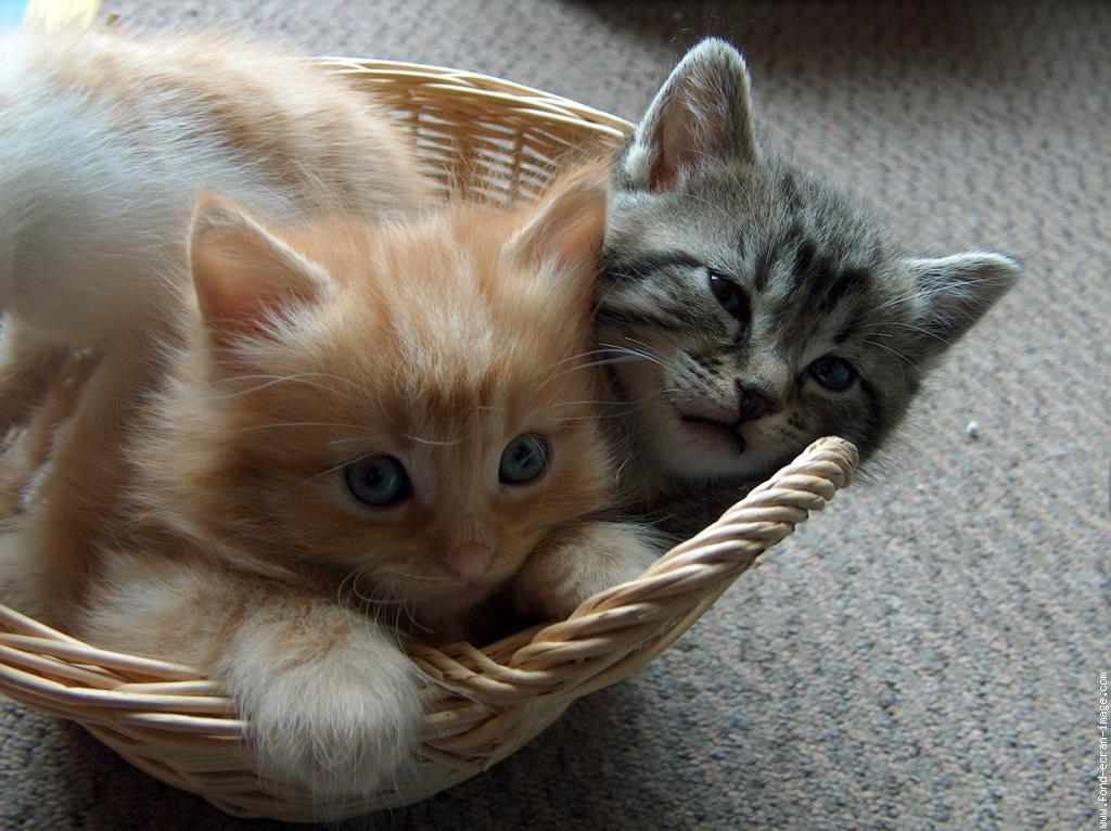 deux chatons trop mignons. Black Bedroom Furniture Sets. Home Design Ideas